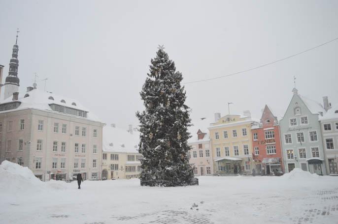 tallin-estonia-21