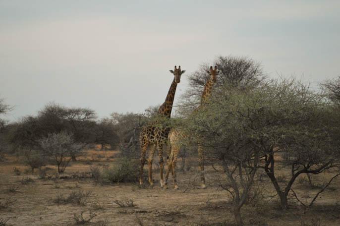 overland-tour-africa-4