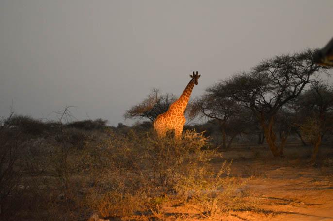 overland-tour-africa